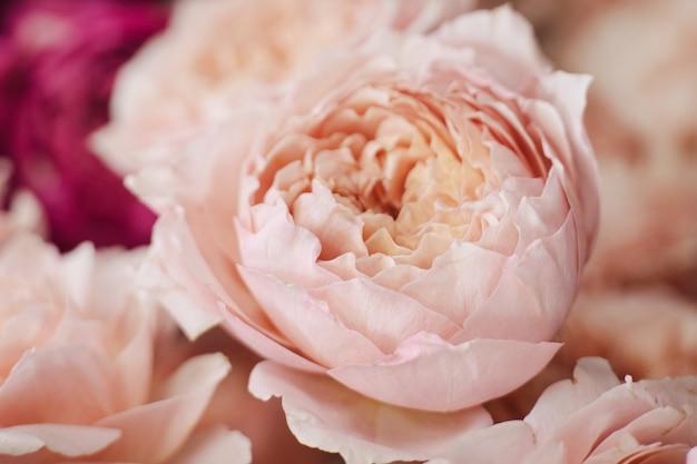 花屋のクローズアップの側面図に立って、柔らかいピンク色の美しい花のバラ