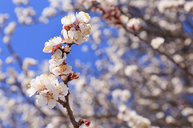 屋外の美しい花の咲く木の枝