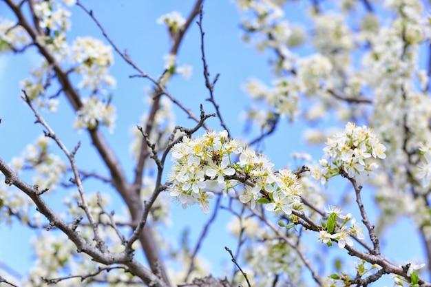 春の日に屋外で美しい花の咲く木、クローズアップ