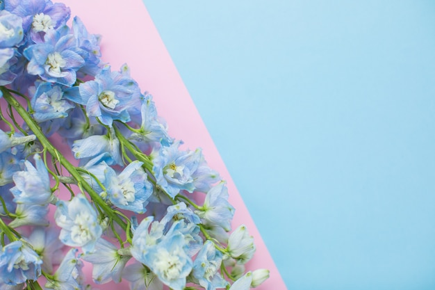 Beautiful blue delphinium on multicolored paper backgrounds with copy space. spring, summer, flowers, color concept, women's day.