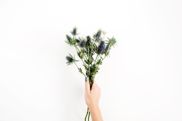 白い背景で隔離の女の子の手で美しい青いエリンギウムの花の花束。フラットレイ、トップビュー