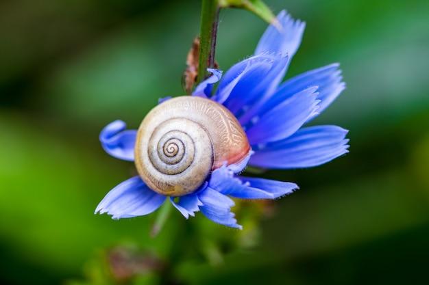 Beautiful blue flowe