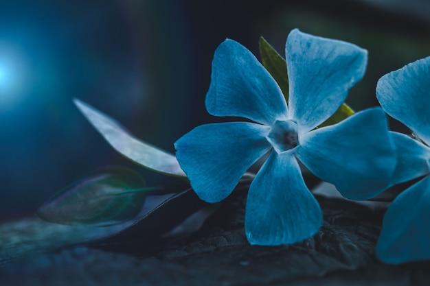 봄 시즌에 아름다운 푸른 꽃 식물