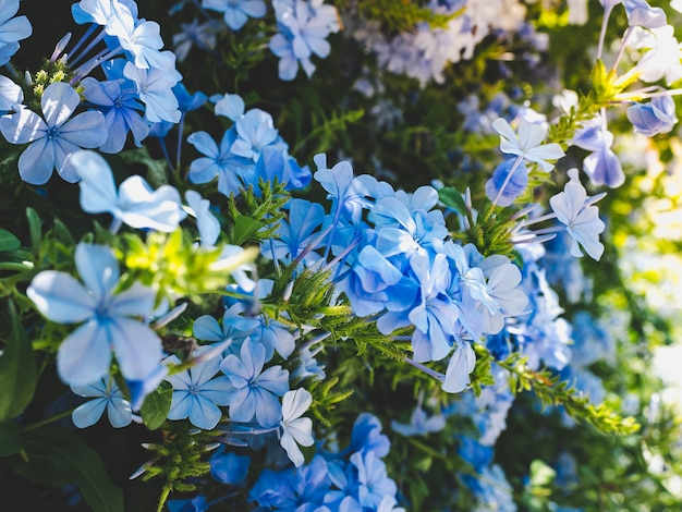 Beautiful blue flowers on the background the blue sky
