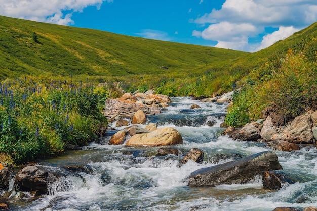 Красивые голубые цветы возле горного ручья. крупные валуны в быстром потоке воды