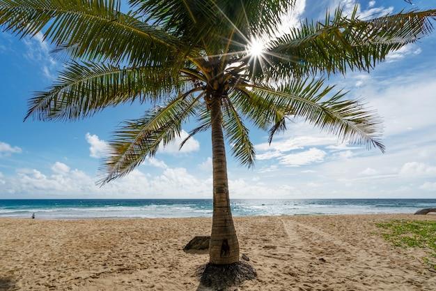 아름다운 푸른 하늘과 코코넛 야자수가 있는 구름은 화창한 여름날 태국 푸켓의 열대 해변에 떠납니다. 자연 배경입니다.