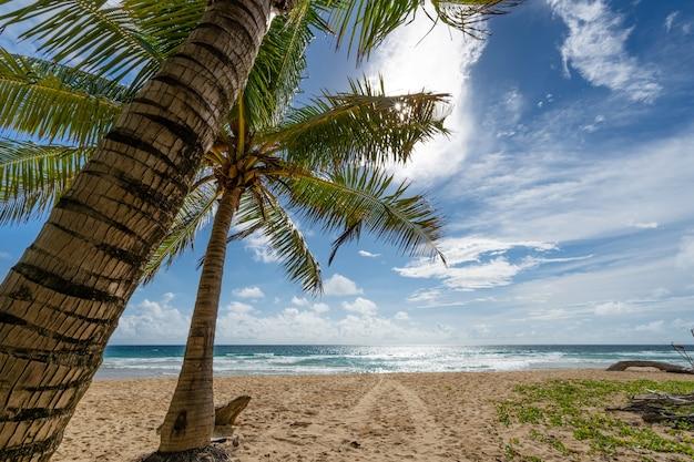 아름다운 푸른 하늘과 코코넛 야자수가 있는 구름은 화창한 여름날 자연 배경에서 태국 푸켓의 열대 해변에 프레임을 남깁니다.
