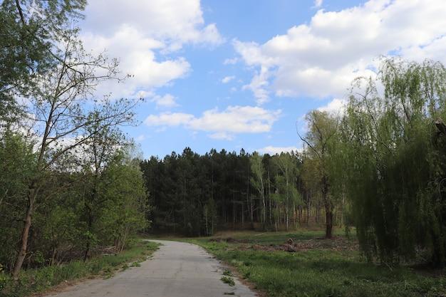 화창한 날 숲 위에 하얀 솜털 구름이 있는 아름다운 푸른 하늘