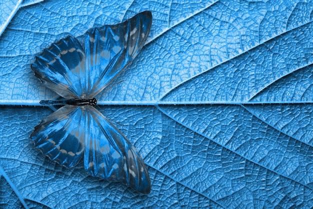 아름 다운 푸른 열 대 나비 절연입니다.