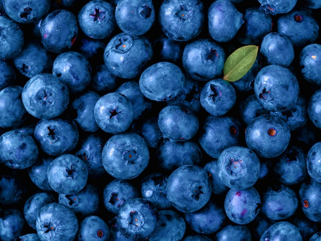 Beautiful blueberries in color of the year 2020 classic blue.