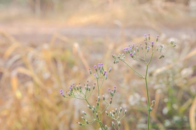 야생 잔디 밝은 배경으로 아름 다운 흐림 숲 초원