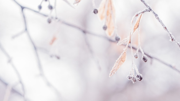 Beautiful blurred delicate winter frost nature background banner
