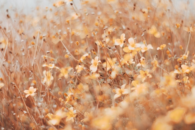 Beautiful blurry background with highlights. plant stems and flowers at sunset. high quality photo