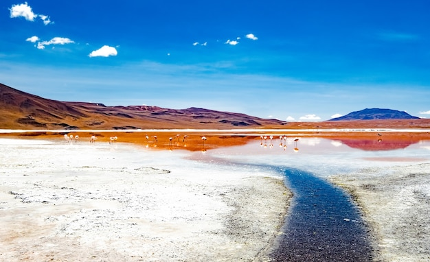 플라밍고가 있는 아름다운 볼리비아 사막 풍경