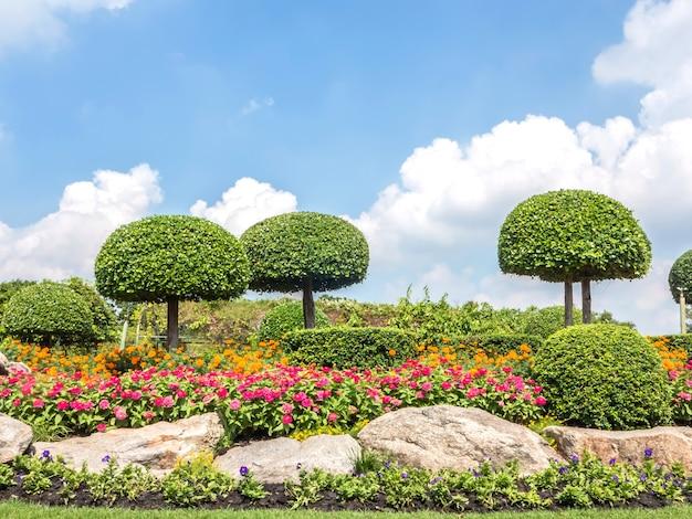 公園の美しい盆栽の木