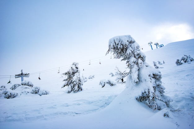 Прекрасный вид снизу на фуникулеры, расположенные над живописным заснеженным склоном с деревьями в пасмурный зимний день.