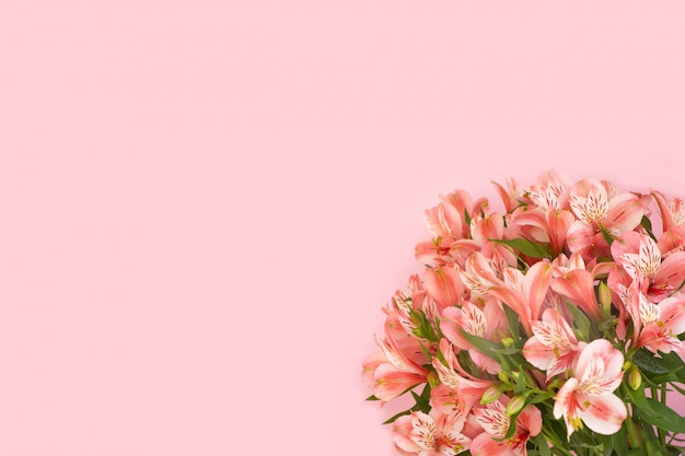 Beautiful bouquet of alstroemeria flowers on pink background.