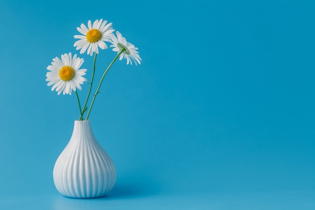 Beautiful bouquet of daisies in vase on blue table
