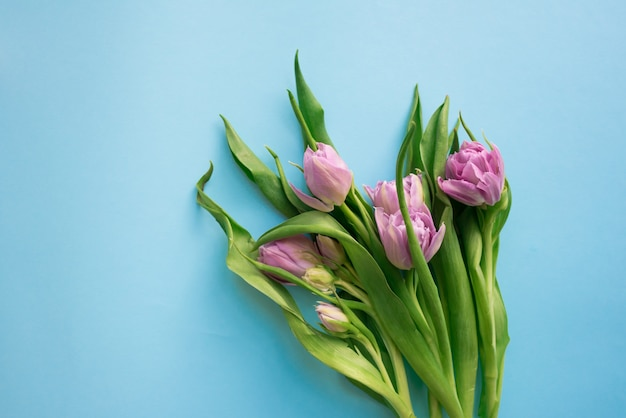 Beautiful bouquet of five tulips isolated on blue background. spring flowers. space for your text.