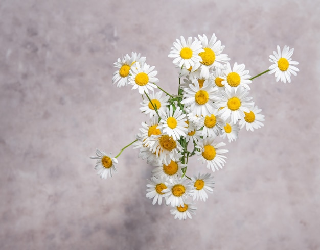 A beautiful bouquet of meadow chamomile on a gray-pink background. top view and close up image