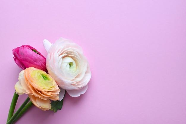 Красивый букет красочных цветов лютик на розовой поверхности