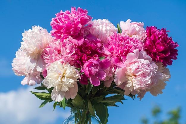 青い空の背景、ウクライナの庭で水とガラスの瓶に花牡丹の美しい花束。赤、ピンク、白のシャクヤクalbifloraまたはpaeonia officinalis、クローズアップ