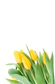 Красивый букет из свежих тюльпанов