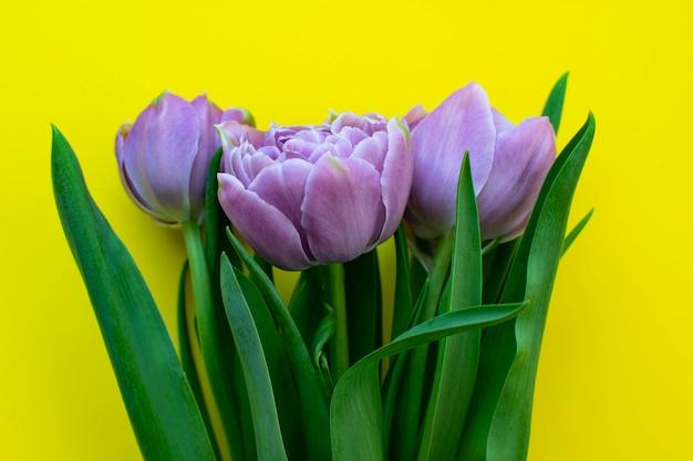 Красивый букет сиреневых весенних тюльпанов на день матери или 8 марта на желтой поверхности