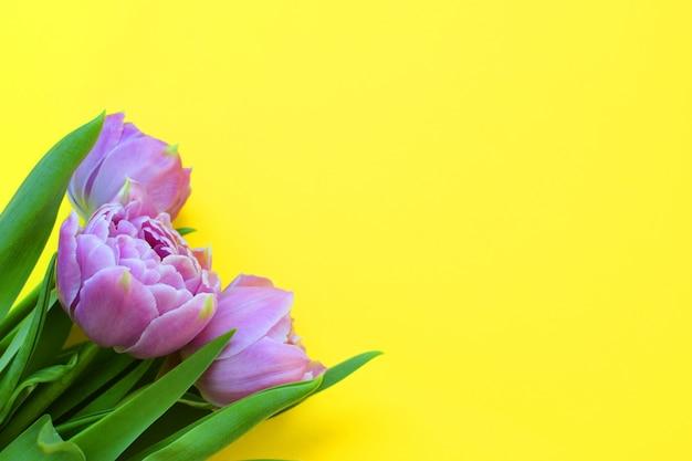 Красивый букет сиреневых весенних тюльпанов на желтой поверхности