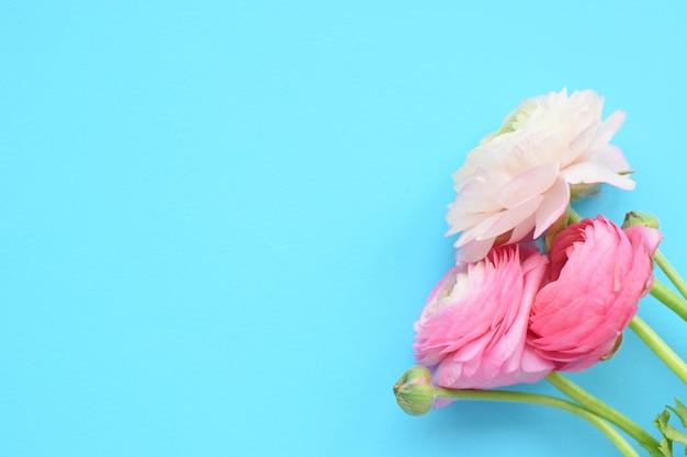 Красивый букет розовых цветов ранункулюса на синей поверхности