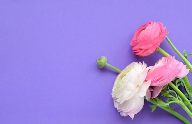 Красивый букет розовых цветов ранункулюса на сиреневой поверхности