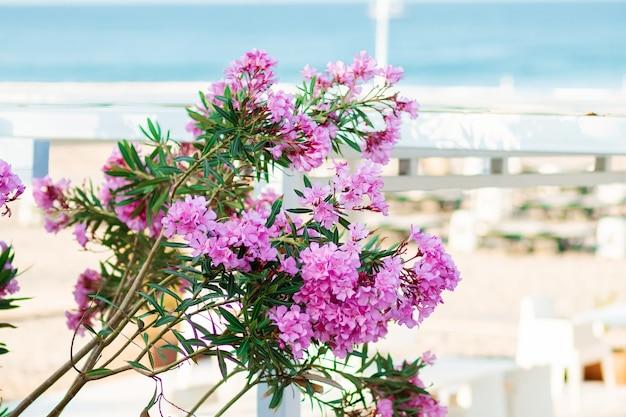 해변과 바다의 배경에 보라색 색상의 아름다운 꽃다발.