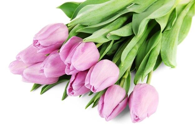 白地に紫のチューリップの美しい花束