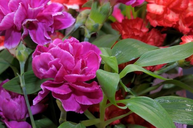 赤いカーネーションの美しい花束