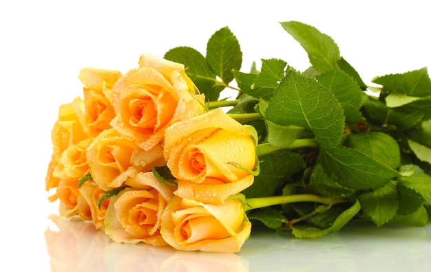 白で隔離のバラの美しい花束