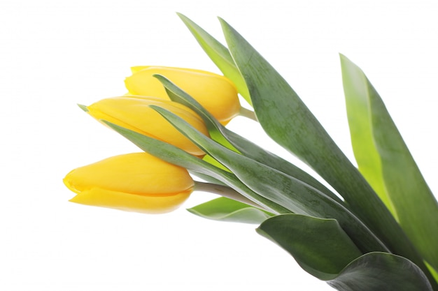 Красивый букет из тюльпанов, разноцветные тюльпаны, природа фон