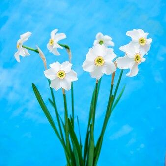 青に白い水仙の美しい花束