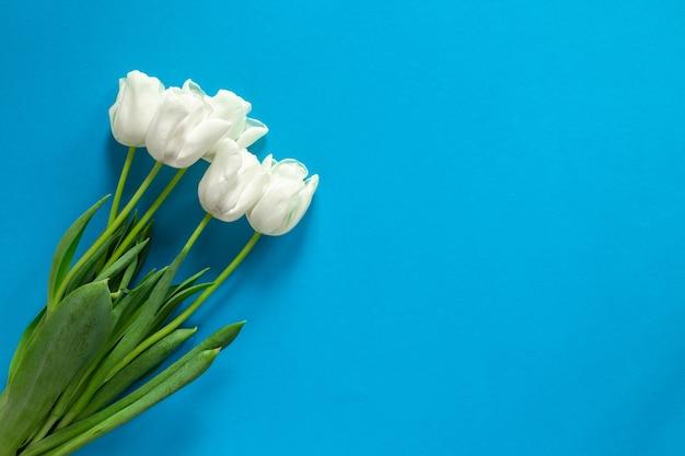 파란색 일반 벽에 흰색 튤립의 아름 다운 꽃다발. 꽃 copyspace와 텍스트에 대 한 장소 시안 색 표면에 고립.