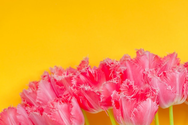 Beautiful bouquet of pink tulips flowers on yellow background.