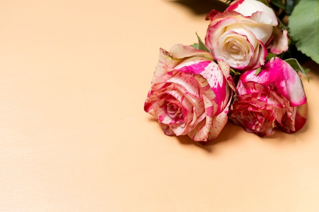 Beautiful bouquet of pink and white rose flowers closeup