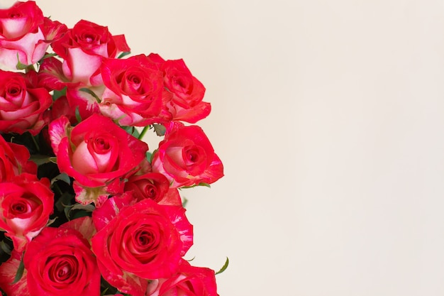 Beautiful bouquet of red roses on light background
