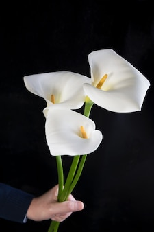 Beautiful bouquet of white callas in male hands on a black  , vertical orientation