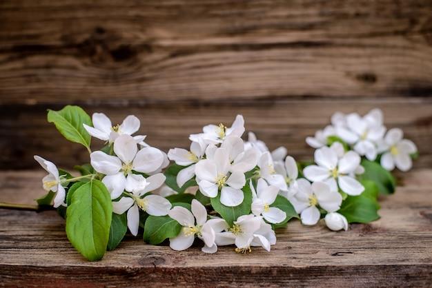 Красивая ветка цветущей яблони с белыми лепестками и зелеными листьями весной на деревянном фоне