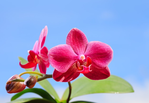 Beautiful branch of pink orchids against cloudy sky