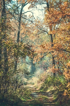 Красивая ветка с листьями и дорогой осень в лесу, фильтр