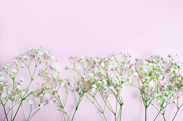 Beautiful branches of white gypsophila lie on a pink background. top place for text.