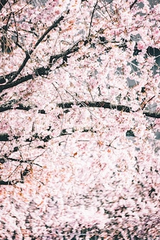 Beautiful branches with cherry blossom flowers against the bright sky