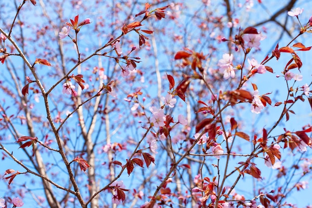 Beautiful branches with flowers on the background of the sky.