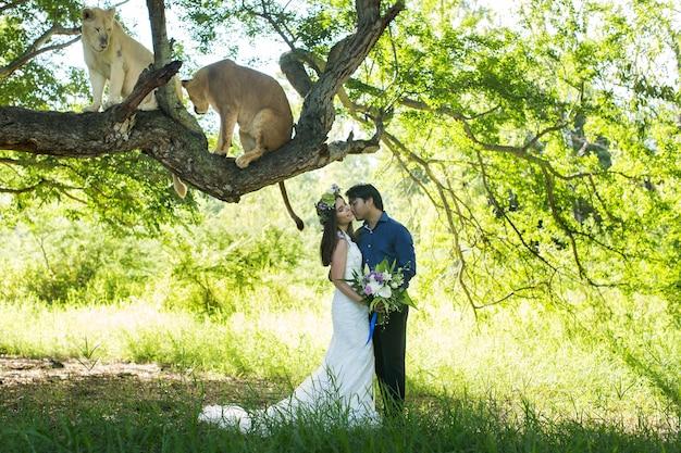 Красивая невеста и жених с двумя львицами на природе