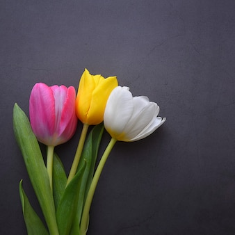 A beautiful bright bouquet of multi-colored tulips in close-up against a dark gray stucco wall.